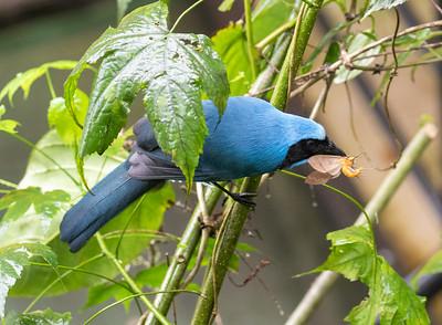 Ecuador non-hummer birds