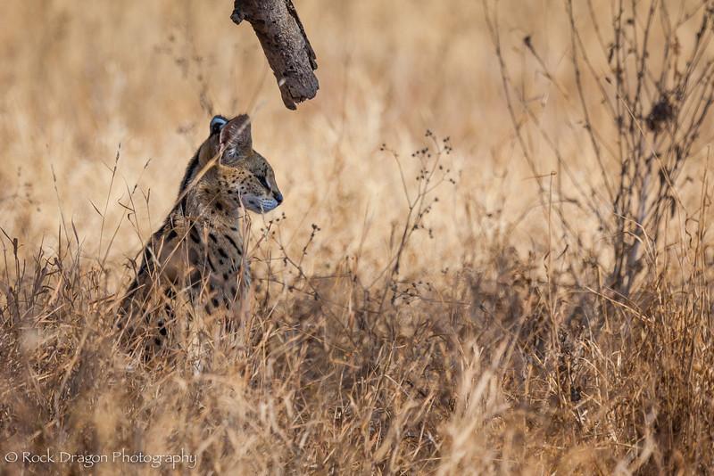South_Serengeti-24.jpg