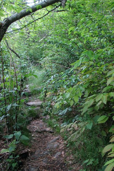 Mountains-to-Sea Trail (5,650')