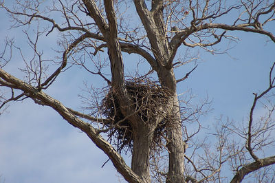 Red Oak Nest