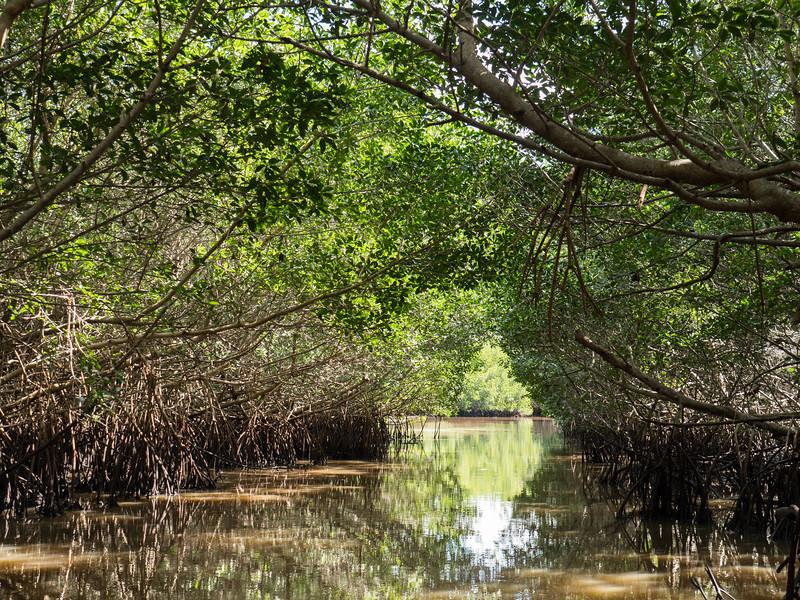 Everglades-67.jpg
