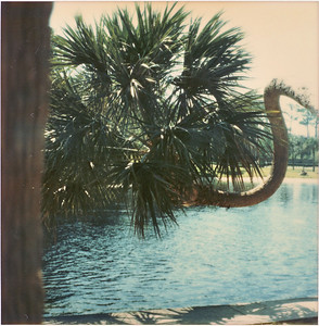 1977? Trip to Florida