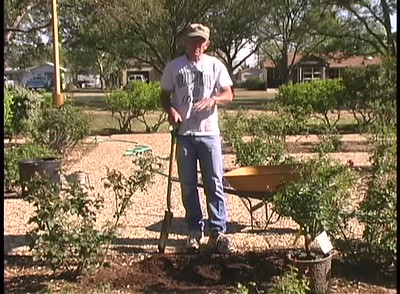 Growing Roses in Lubbock, Texas. Roll over a thumbnail to see the title of the video.