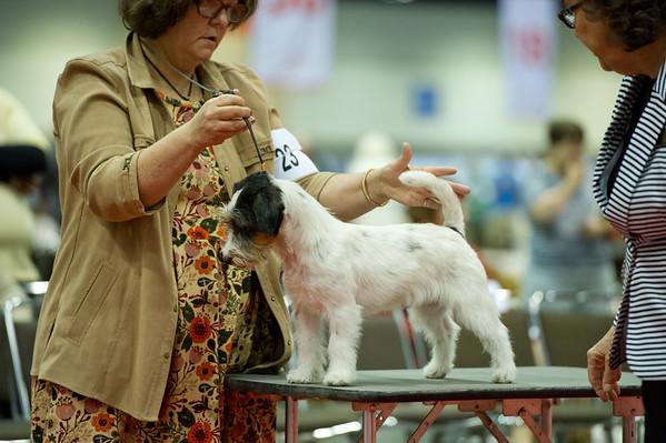 Miyahara - russell terrier