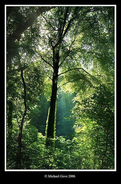 Light through trees in Blaise Castle (64034027).jpg