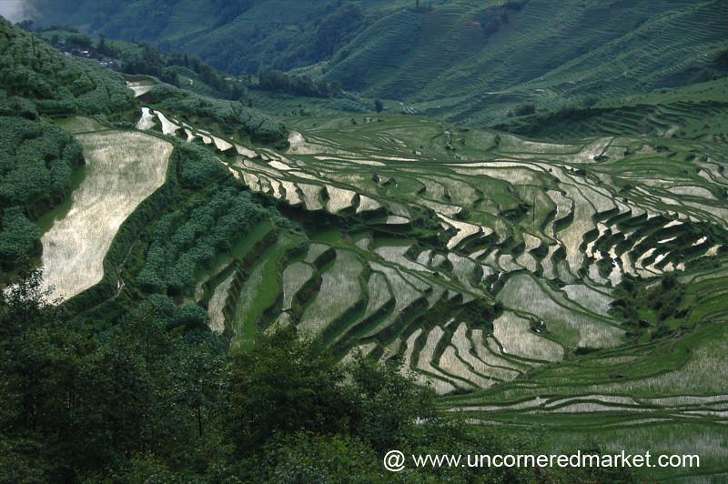 Terraced Rice Fields - Yuanyang, China