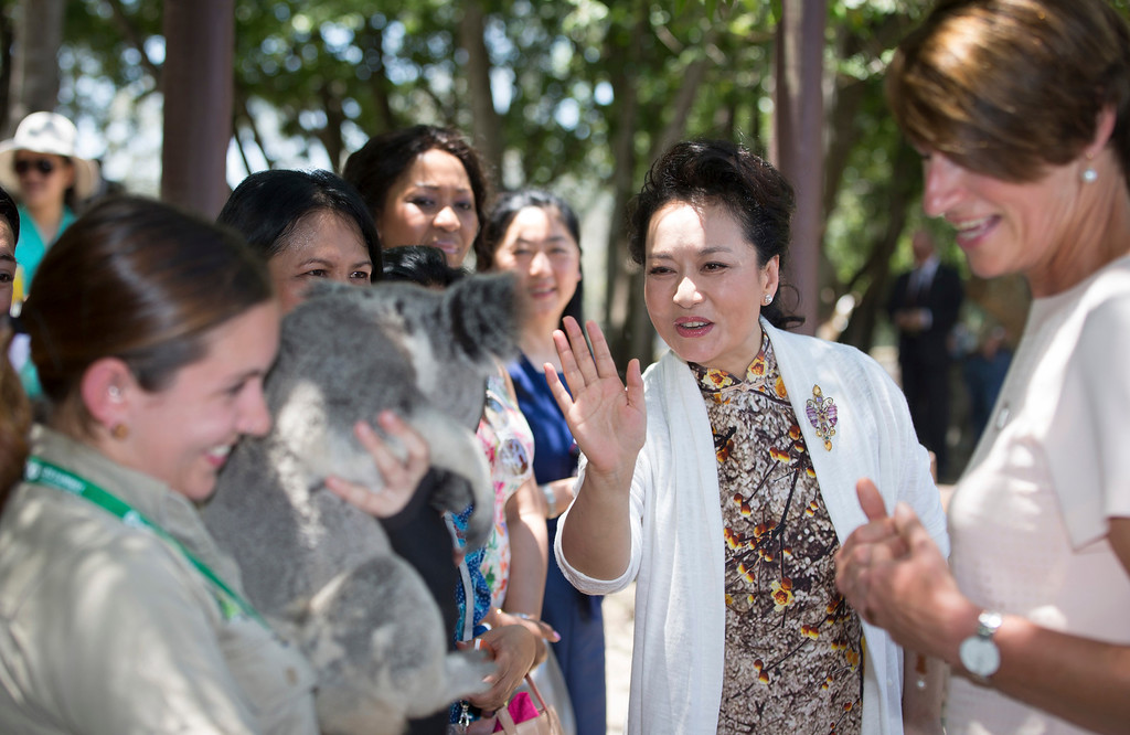 . Peng Liyuan, wife of China\'s President  Xi Jinping waves to a koala on a visit to the Lone Pine Koala Sanctuary, as part of the G-20 Leaders Spouse program in Brisbane, Australia, Saturday, Nov. 15, 2014. (AP Photo/Ian Waldie, Pool)