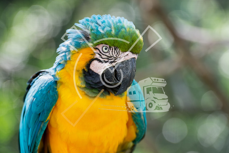 Portrait of blue-and-yellow macaw.