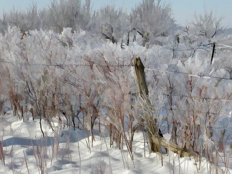 Ice Storm IIIa.jpg