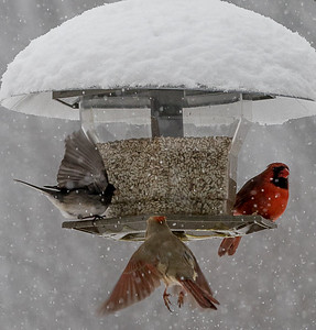 January Theme-Birds of Winter