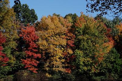 Autumn At Saulter's Pond 10-15-19