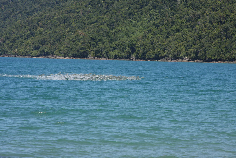 Then we see a massive school of sea mullet jumping out of the water. Etty Bay