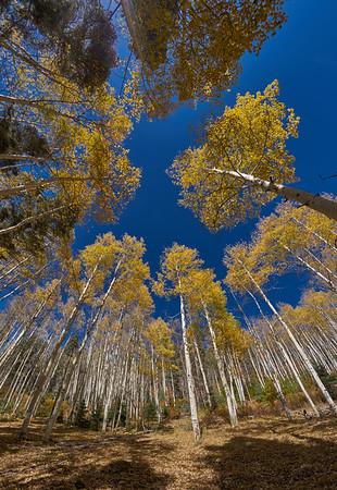 Taos Autumn Brilliance - 2015