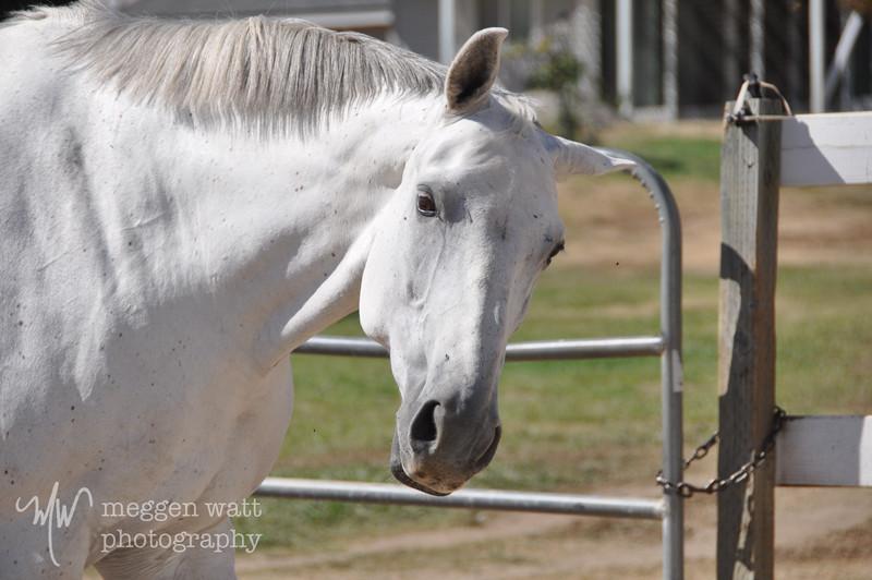 EB&Horses-016.jpg