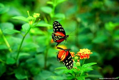 Butterflies & Moths - Set 13