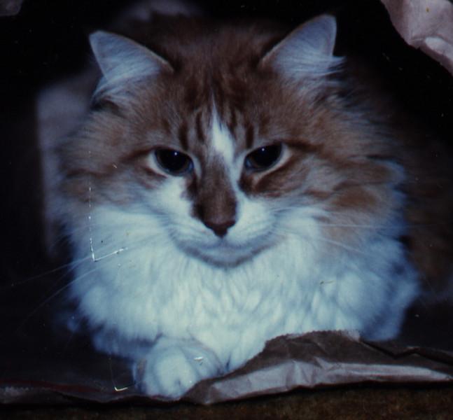 Garfield Bag Cat.jpg