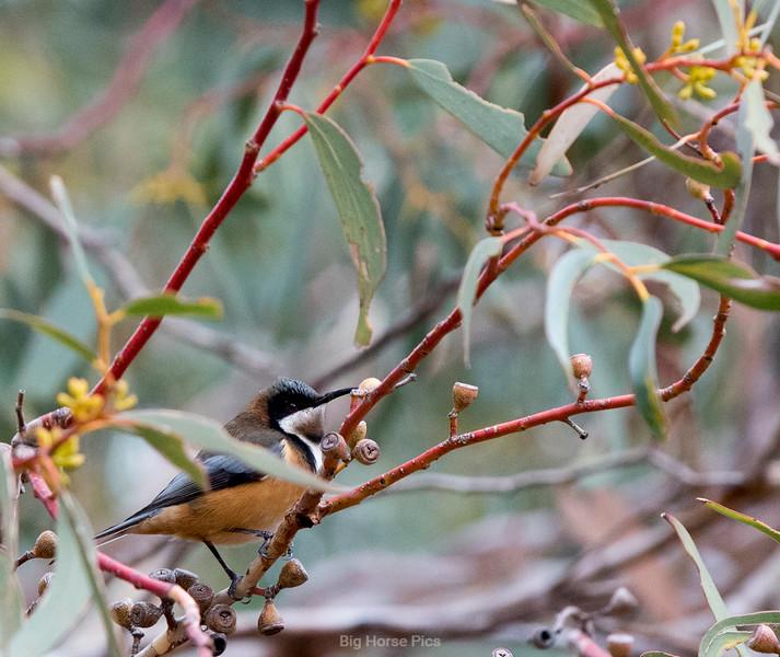 Bird in gum.jpg