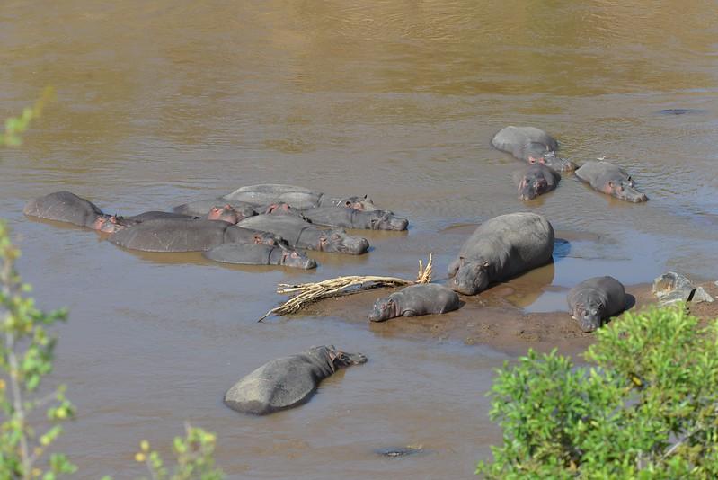 East Africa Safari 213.jpg