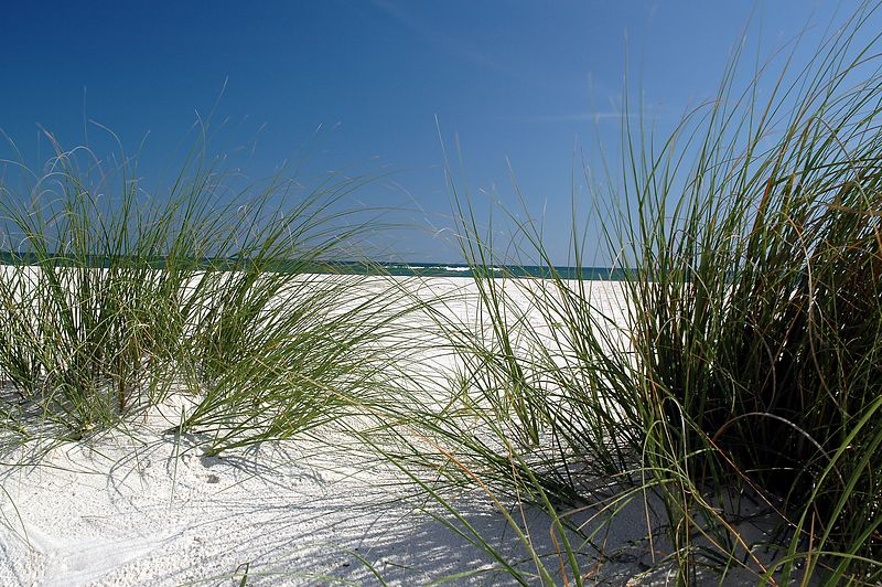 Looking through the sea oats.