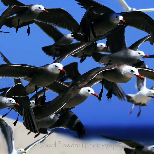 Flight of the gulls.jpg
