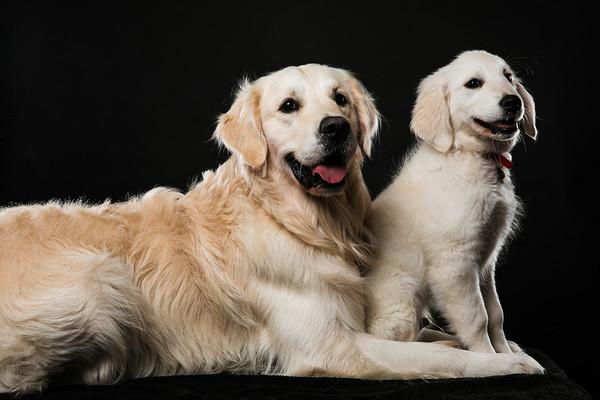 Dog Day 2 @ Harris and Fox