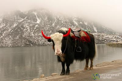 Sikkim: Mountains, Yaks and Buddhist Monastaries