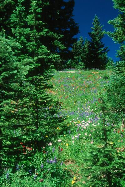 amh FLOWERS (1223).jpg