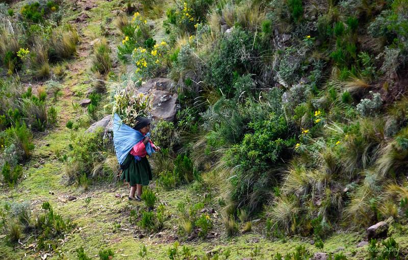 Peru 2017-5986.jpg