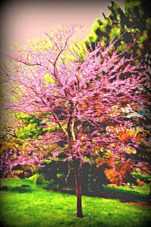Japanese Gardens Springfield mo