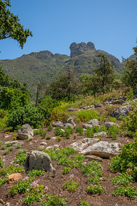 Kirstenbosch National Botanical_2076