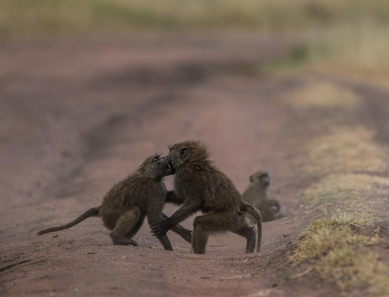 Tanzania_Feb_2018-1135.jpg