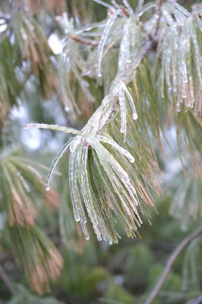 Winter Weather - 1/18/2011