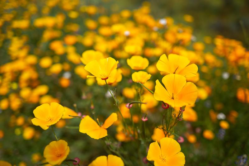Spring Flowers A-105.jpg