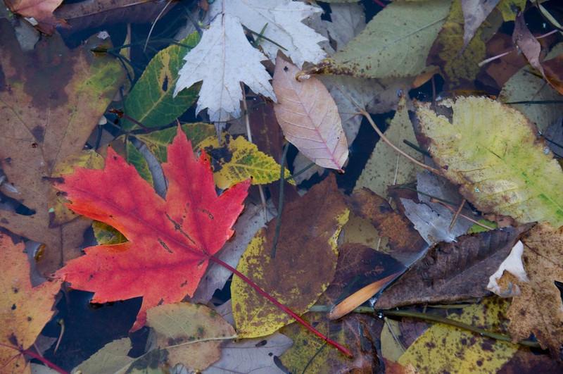fall_leaf.jpg