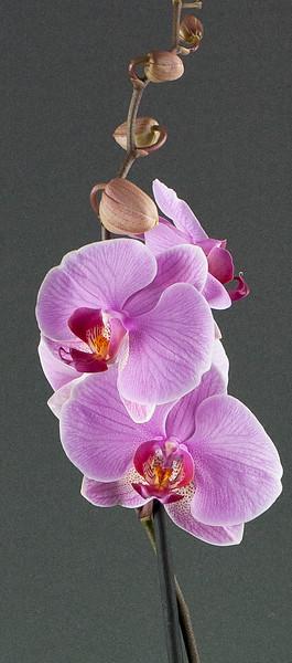 Flower Boutique --30.jpg