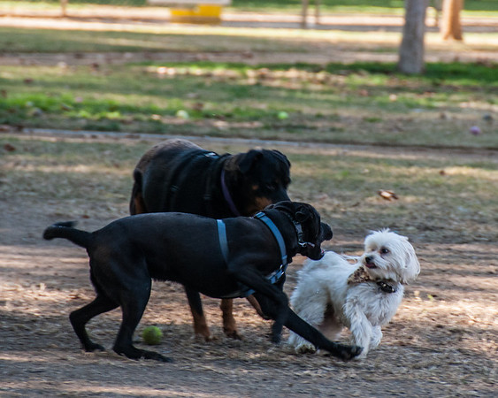 Dog Park Nov '12