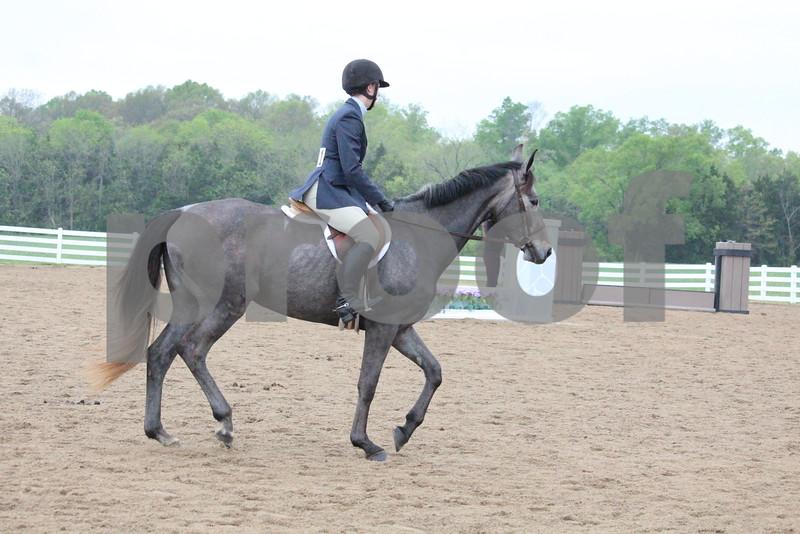 Pleasure Horse- Adults