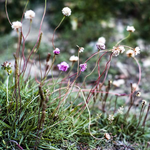 Shore flora, sandstone beach, Beadnell, Northumberland UK
