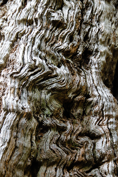 Close-up of tree trunk - Australia