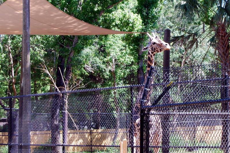 2014 Zoo in Sanford, Florida (21).JPG