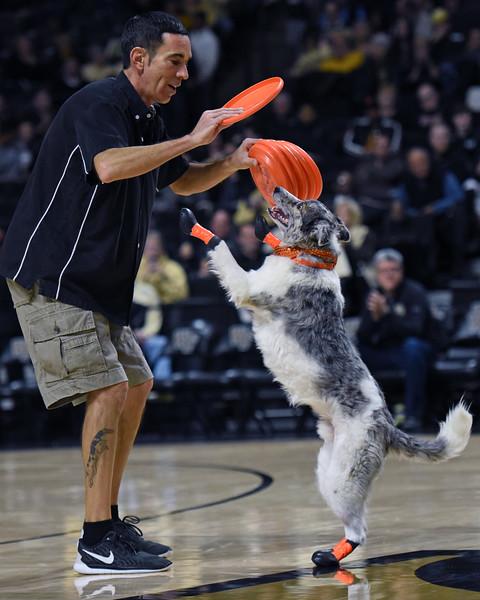 Frisbee dogs 2016-32.jpg