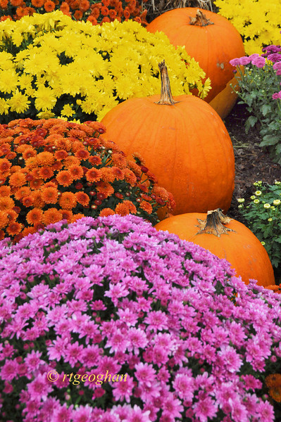 Oct 6_Fall GardenDsplay_9722.jpg