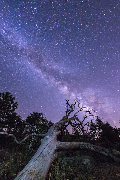 Fallen Tree and the Milky Way