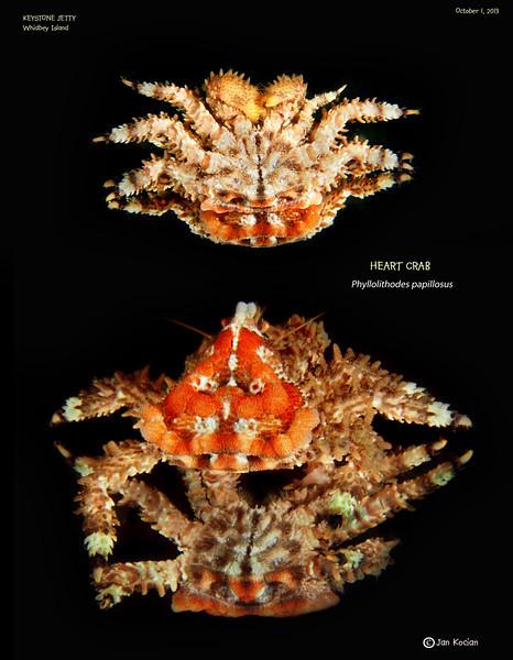10.1.13 heart crab mirror S .jpg