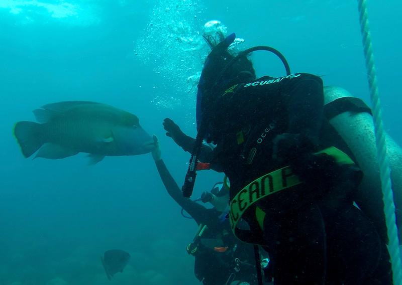Maori Wrasse fish - Great Barrier Reef