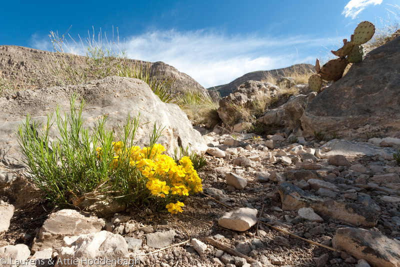 Wild flowers at Dog Canyon at Oliver Lee Memorial State Park, New Mexico