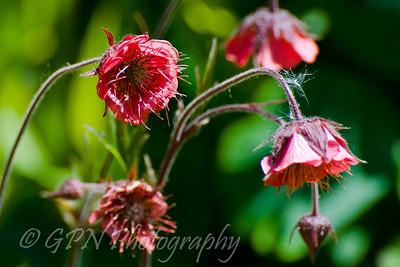 Garden Flowers 2010