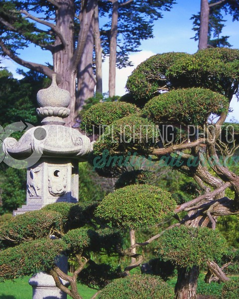 Japanese Garden_batch_batch.jpg