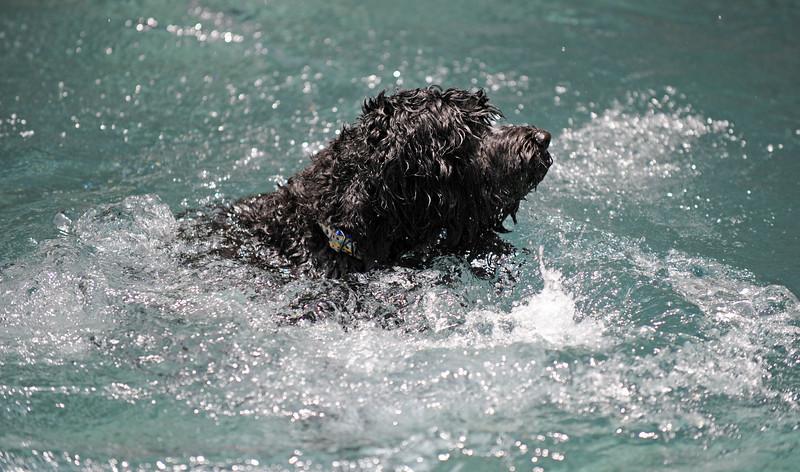 Disco Takes A Swim: June 29, 2008