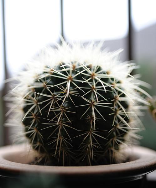 cactus einstein 031420-1817.jpg